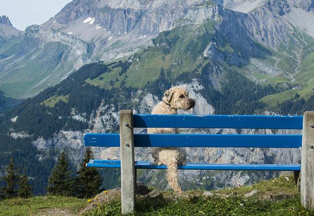 Camping mit Hund Schweiz Berge Ausblick