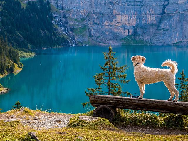 Camping mit Hund Schweiz See