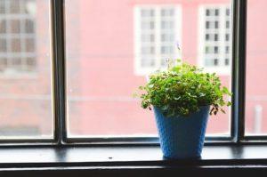Pflanzen auf Fenstersims